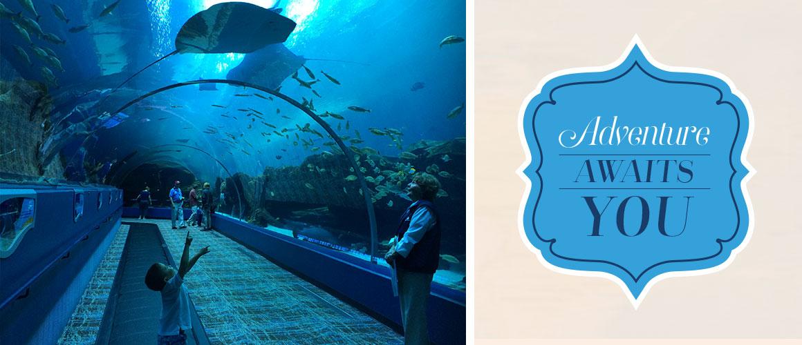 Atlanta_Aquarium_1160x500