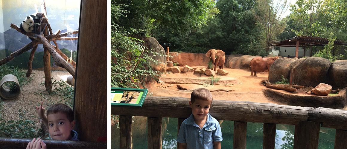 Atlanta_Zoo_1160x500