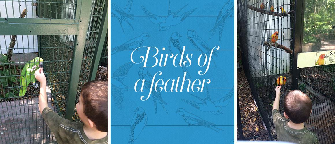 Birds_A