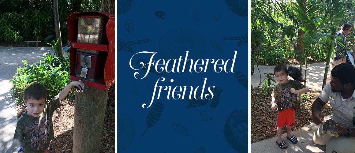 FeatheredFriends