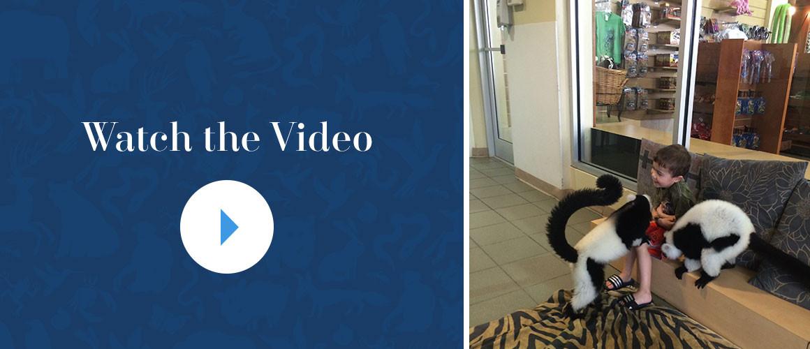 Lemurs_PlayVideo
