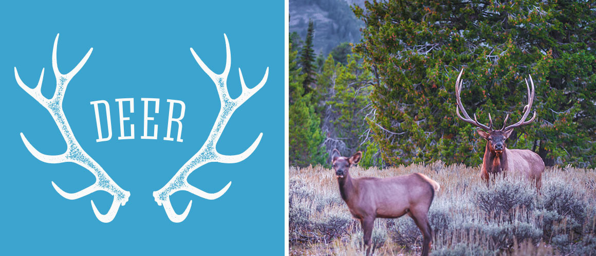 Deer_Sighting