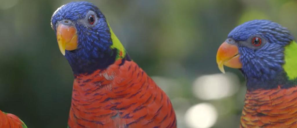 Getting Wild at the San Diego Zoo Safari Park