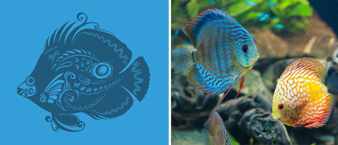 ExoticFish