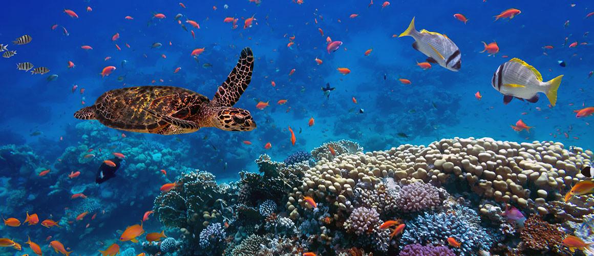 Walt Disney World Adventure Under The Sea Epcot S Aqua Tour