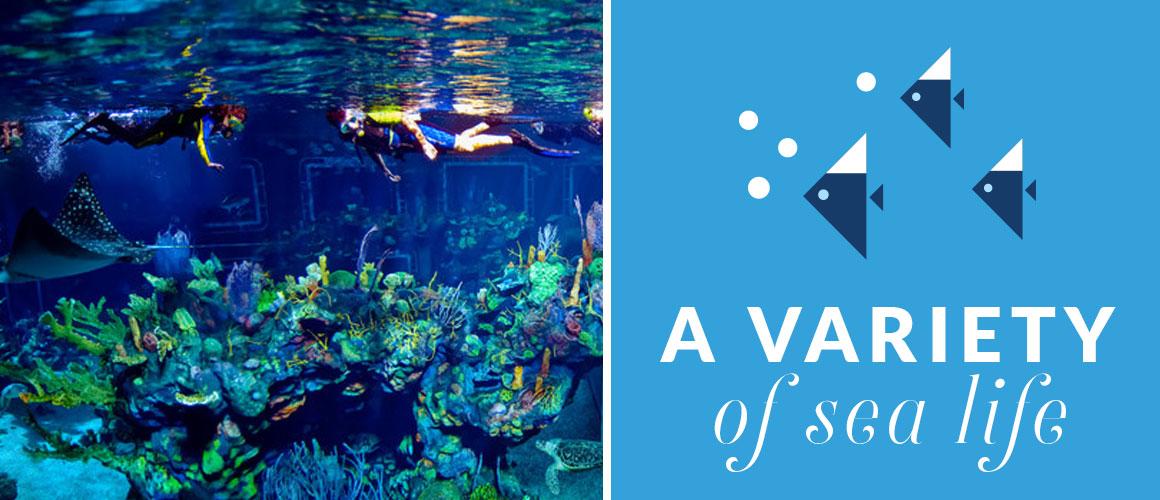 Walt Disney World Adventure Under the Sea: Epcot's Aqua Tour