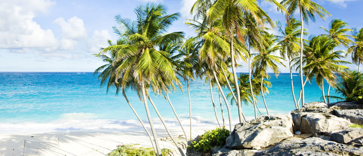 Palm Beach Island Searching Cars