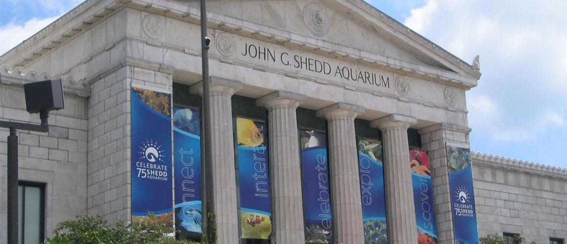 Kids And Family Adventure At Chicago S Shedd Aquarium