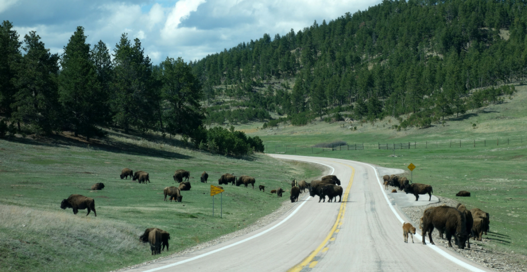 Showing The Kids How The West Was Won:  A Wild Western Family Road Trip to Grand Teton, Yellowstone, & Rocky Mountain National Parks