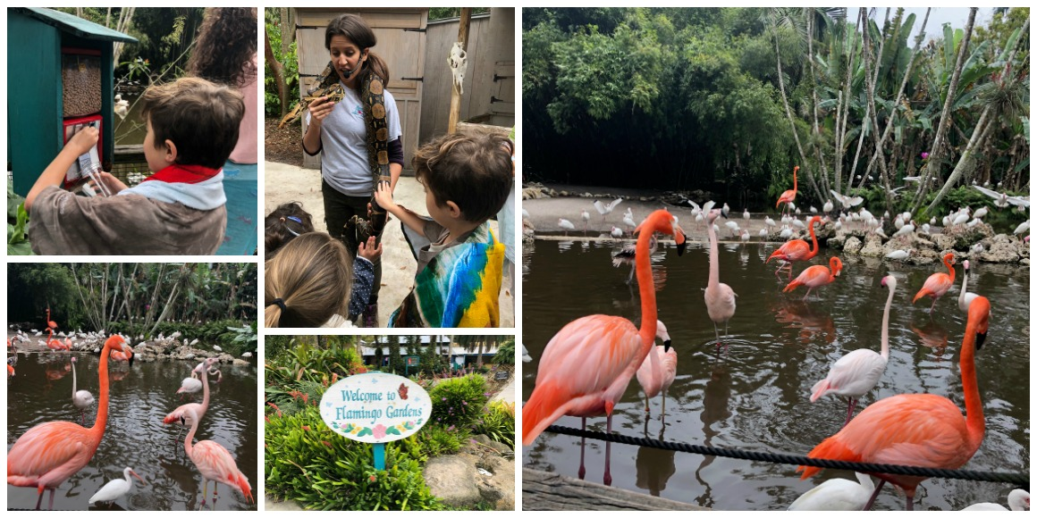 Review of Flamingo Gardens Ft. Lauderdale - Well Traveled Kids