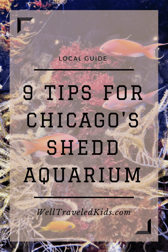 9 Tips for Family Adventure at Chicago's Shedd Aquarium