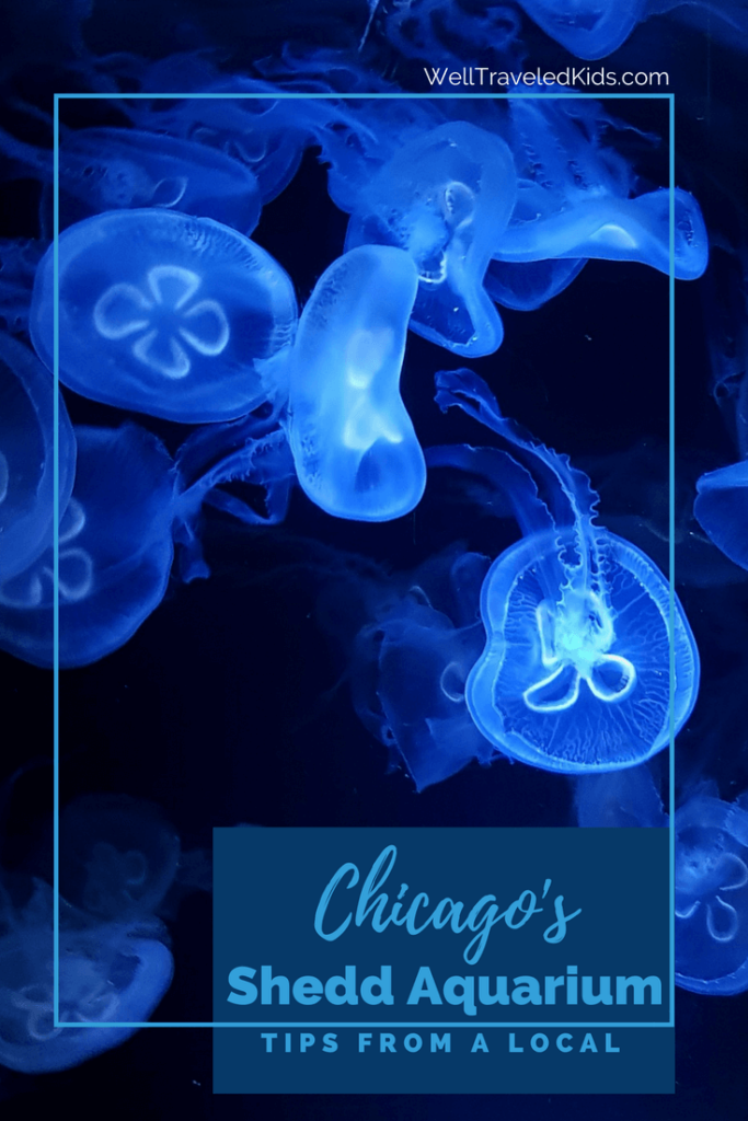 Local Tips for Family Fun at Chicago's Shedd Aquarium