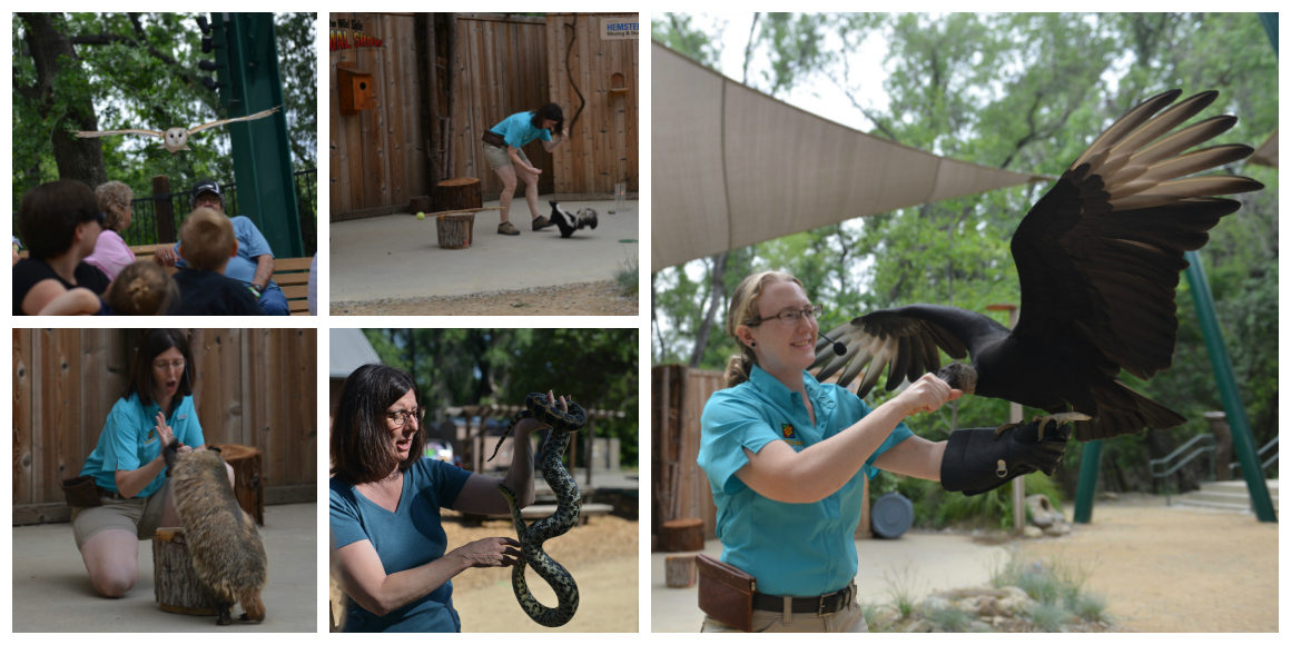 Wild Side Animal Show in Redding California with kids