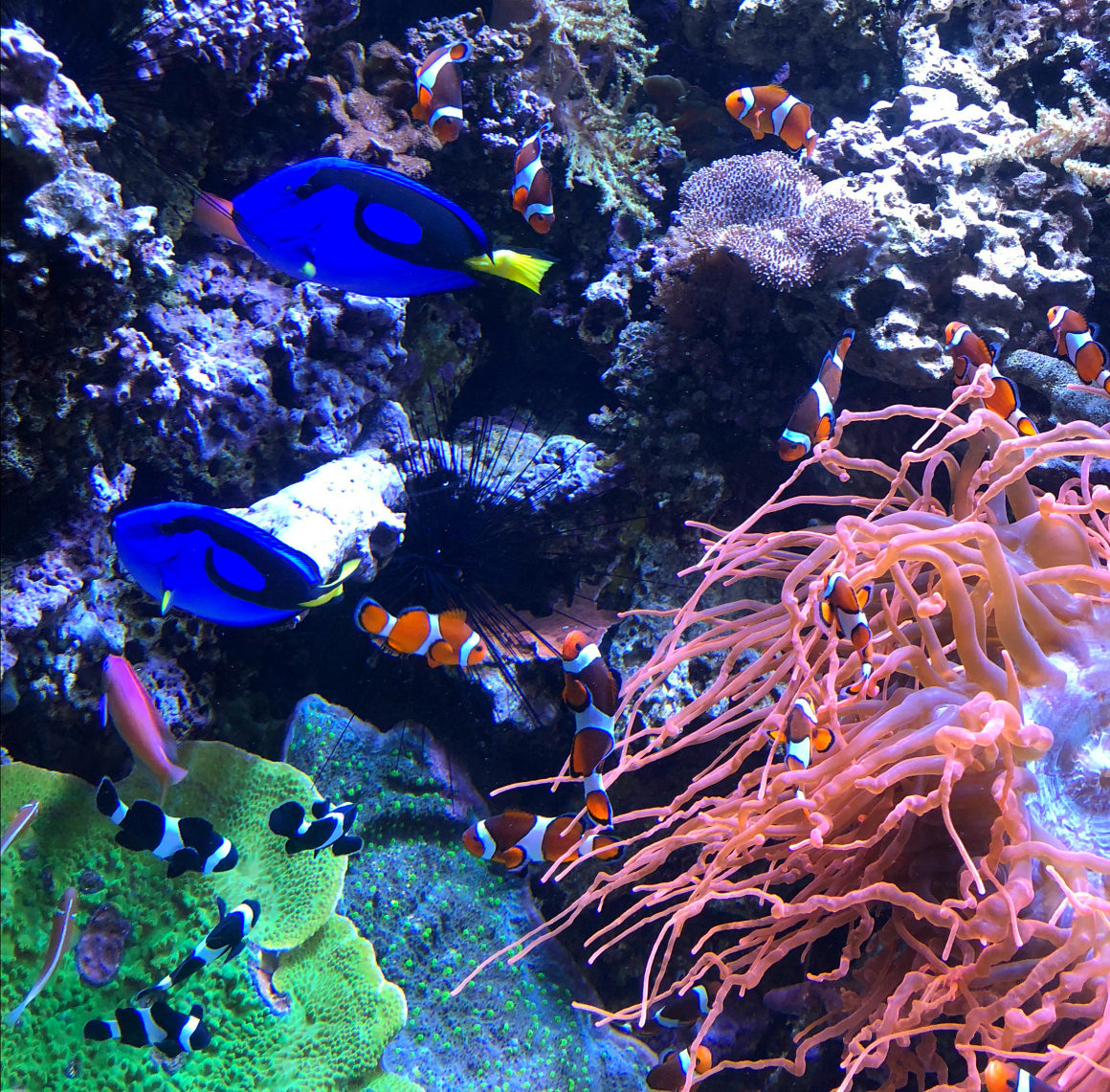 Finding Dory at Montery Bay Aquarium - Well Traveled Kids
