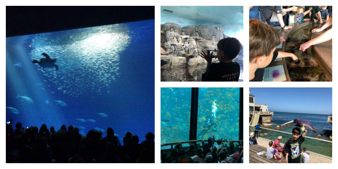 Monterey Bay Aquarium tips for kids- Well Traveled Kids