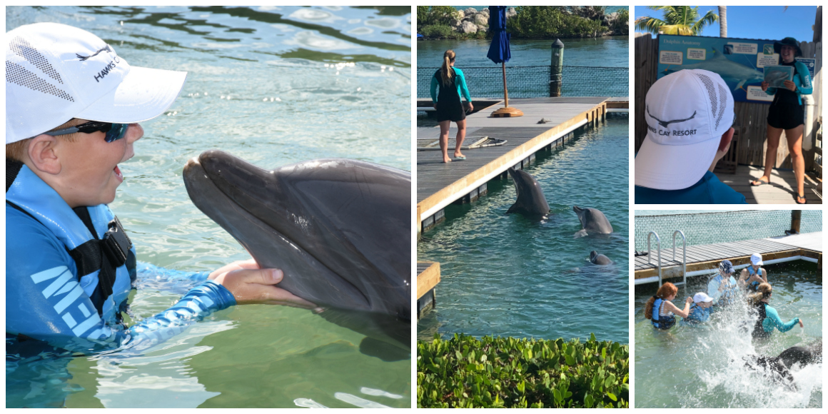 Swimming with the dolphins at Hawks Cay
