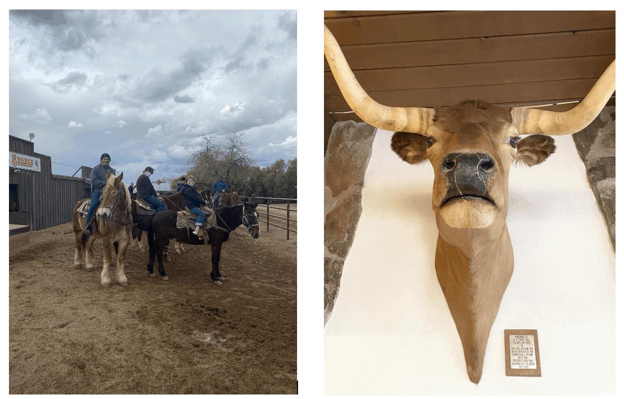 Top 5 Reasons to visit White Stallion Arizona Dude Ranch